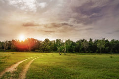 Summer landscape with green grass, road and clouds Royalty Free Stock Image