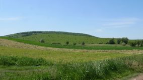 Summer landscape with green grass, road and green trees stock video footage