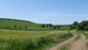 Summer landscape with green grass, road and green trees stock video