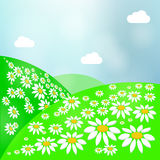 Summer Landscape with Green Grass, Sun and Clear Sky. Vector Meadow. Summer landscape bright meadow with daisies, green grass and sky Stock Photos