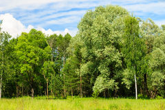 Summer landscape with green grass and trees on a meadow and sky Royalty Free Stock Photography