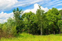 Summer landscape with green grass and trees on a meadow and sky Stock Image