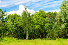 Summer landscape with green grass and trees on a meadow and sky Stock Photos