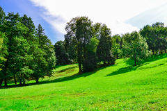 Summer landscape. Green hill with trees. Green trees on a Sunny day. Trees on a picturesque hill. A bright, Sunny day in the green forest royalty free stock photos
