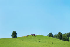 Summer landscape with green hills and herd of horses in the distance Stock Image