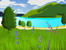 Summer landscape. Green lawn with flowers and trees. Lake and mountains. Clear weather. Summer landscape. Vector background. Green lawn with flowers and trees Royalty Free Stock Image