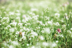 Summer landscape, green meadow with flowers Royalty Free Stock Photos