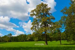 Summer landscape Stock Photography