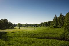 Summer landscape of green woods and river, overgrown with wild grasses. Meadow surrounded by a mixed forest. royalty free stock image