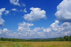 Summer landscape h. Summer landscape with cloudy sky, green grass and trees Stock Image