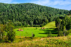 Summer landscape with haystacks in the mountains Stock Image