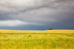 Summer landscape before heavy storm Stock Photo