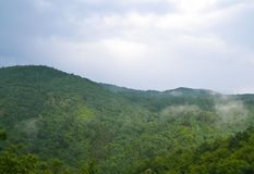 Summer landscape: high hills overgrown with a dense green fores stock image