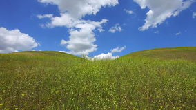 Summer landscape at hills and mountains stock video footage