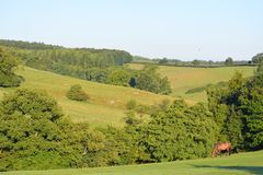 Summer landscape with a horse, North Yorkshire, UK stock photography