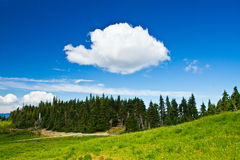 Summer landscape, Hurricane Ridge Royalty Free Stock Photo
