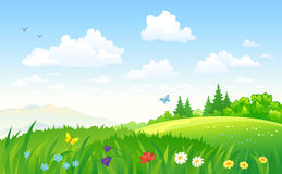Summer landscape. Illustration of a beautiful green summer landscape Royalty Free Stock Images