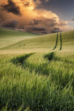 Summer landscape image of wheat field at sunset with beautiful l Stock Photos
