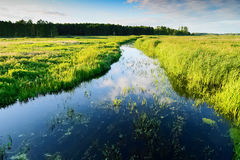 Summer landscape with Jegrznia river and marsh vegetation in the vicinity of Biebrza National Park. Royalty Free Stock Photos