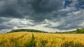 Summer landscape 4k Stock Images