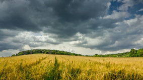 Summer landscape 4k stock video footage