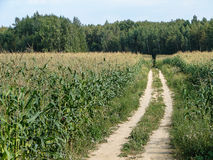 Summer landscape in the Kaluga region of Russia. Stock Image