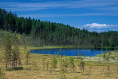 Summer landscape with lake among forest Royalty Free Stock Images
