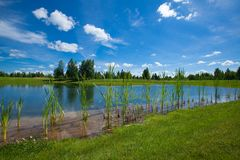 Summer Landscape. Lake In A Golf Course summer pond golf royalty free stock photos