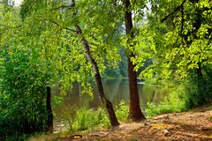 Summer Landscape with lake in Martyshkino Royalty Free Stock Image