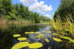 Summer landscape on lake Royalty Free Stock Photos
