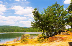 Summer landscape with lake and oaks Stock Images