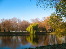 Summer landscape. Summer lake in the park. Trees and sky stock photo