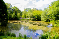Summer landscape. Summer lake in the park. Trees and sky stock image