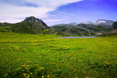 Summer  landscape with lake and pasture Stock Images