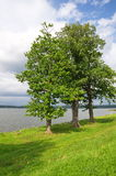 Summer landscape with lake Seliger Stock Images