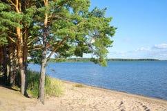 Summer landscape with lake Seliger Stock Images