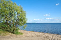 Summer landscape with lake Seliger Stock Photography