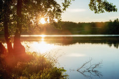 Summer landscape with lake and tree. Stock Photo