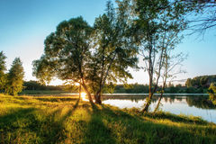 Summer landscape with lake and tree. Royalty Free Stock Photography