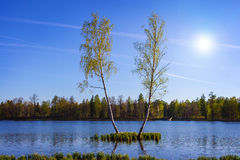 Summer landscape with lake and two birch. Stock Image