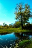 Summer landscape by the lake royalty free stock photo