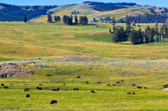 Summer landscape, Lamar Valley, Yellowstone Stock Images