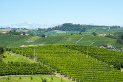 Summer landscape in Langhe (Italy) Stock Image