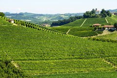 Summer landscape in Langhe (Italy) Royalty Free Stock Photo