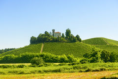 Summer landscape in Langhe (Italy) Royalty Free Stock Images