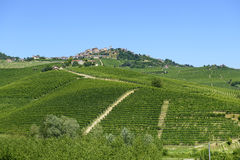 Summer landscape in Langhe (Italy) Royalty Free Stock Photos