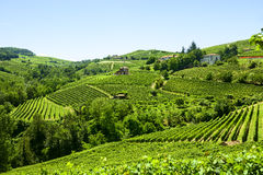 Summer landscape in Langhe (Italy) Stock Images