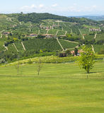 Summer landscape in Langhe (Italy) Stock Photos