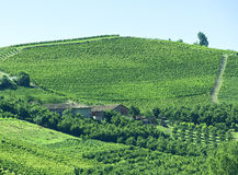 Summer landscape in Langhe (Italy) Royalty Free Stock Photography