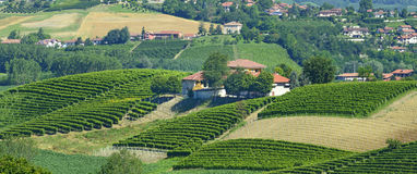 Summer landscape in Langhe (Italy) Stock Photography